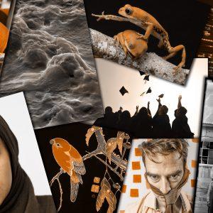 Agence Champ libre – Images gratuites et libres de droits pour illustrer la recherche